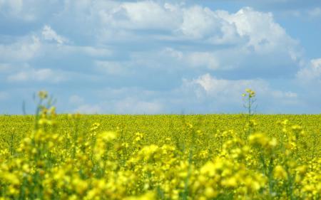 Обои пейзажи, обои, поле, цветы