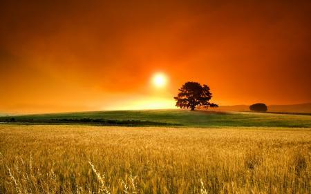 Обои пейзажи, фото, поле, трава
