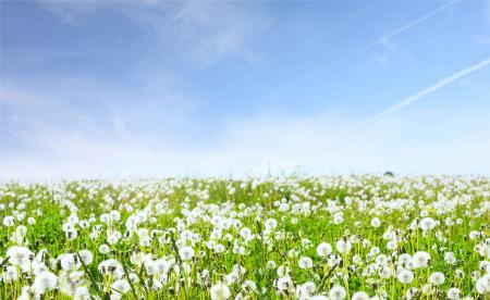 Фото пейзажи, поля, цветы, природа