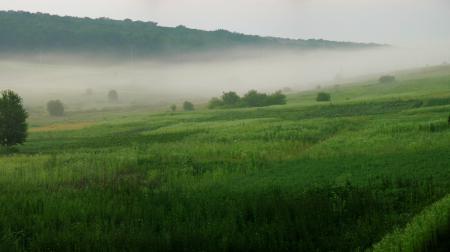Фото пейзажи, природа, обои, леса