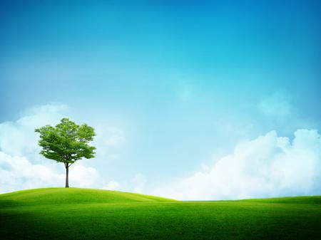 Картинки пейзажи, обои, деревья, дерево
