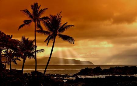 Заставки пальмы, лучи, океан