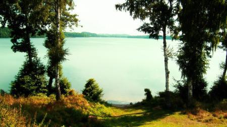Картинки озеро, березы, вода