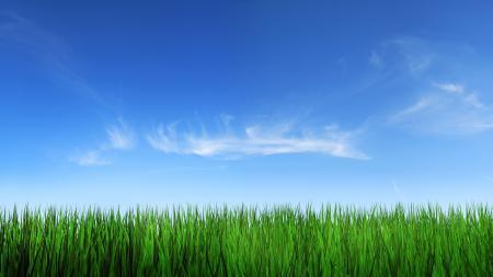 Фото пейзажи, трава, небо, фото