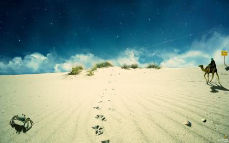 Фотографии песок, небо, верблюд, бэдуин