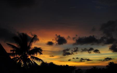 Фото природа, пейзаж. вечер, пальмы, закат