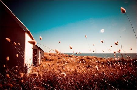 Картинки дом, поле, сухие, травы
