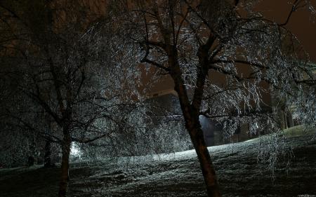Фото ночь, деревья, свет