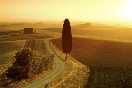 Фотографии поле, дерево, пейзаж, дорога