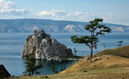 Фото пейзаж, природа, дерево
