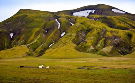 Фотографии гора, снег, зелень, овцы