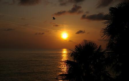 Фотографии море, пальмы, закат, чайка