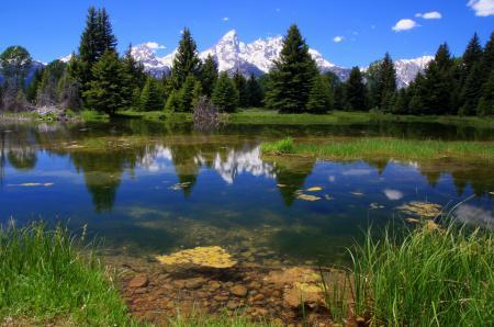 Картинки Grand teton, National park, горы, лес