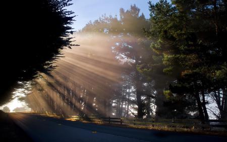 Обои утро, дорога, свет, пейзаж