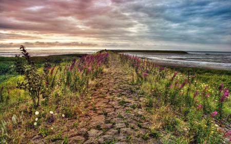 Фото цветы, море, небо, пейзаж