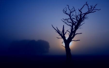 Картинки дымка, туман, утро, природа