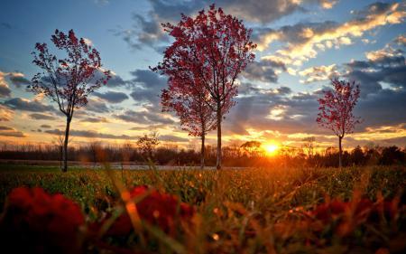 Фото солнце, осень, трава