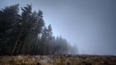 Фотографии лес, сумерки, туман