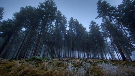 Фотографии лес, сумерки, темно
