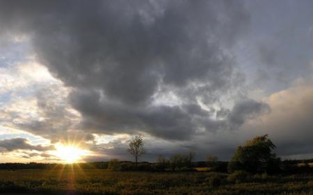 Заставки пейзажи, фото, солнце, трава