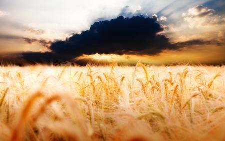 Фото пейзажи, поле, фото, колосья