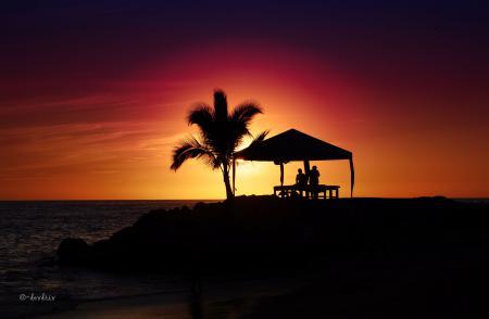 Обои Chill Out, закат, пальма