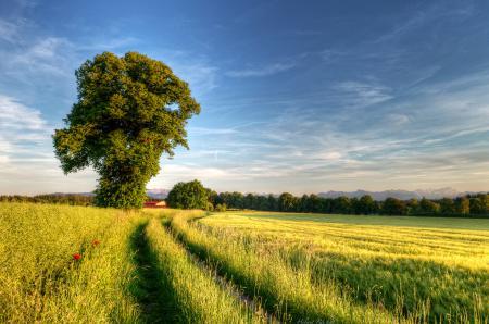 Обои поле, дерево, дорога, весна