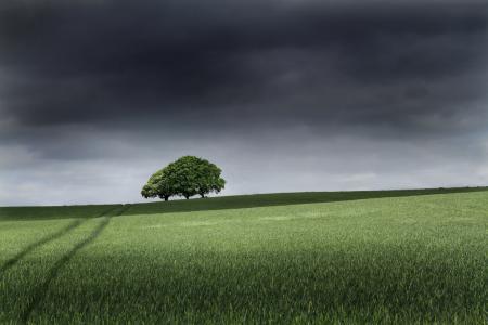 Фотографии поле, деревья, небо, серость