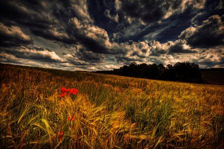 Фотографии поле, небо, облака, маки