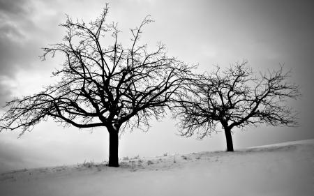 Фото зима, снег, холод, деревья