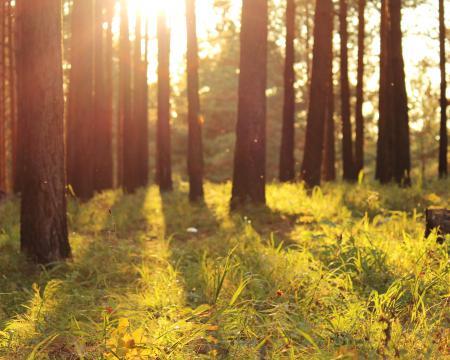 Заставки природа, лес, солнце, свет
