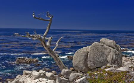 Заставки море, небо, дерево, пейзаж