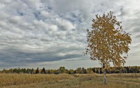 Фотографии поле, дерево, осень, природа