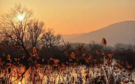 Заставки закат, озеро, камыш, пейзаж