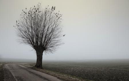 Картинки дорога, дерево, туман, пейзаж