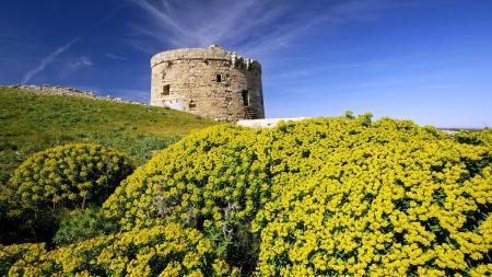 Фотографии испания, башня, холм, цветы
