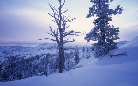 Картинки снег, зима, деревья, ветки