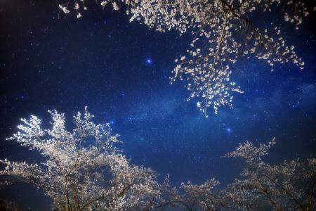 Картинки ночь, небо, звезды, сакура