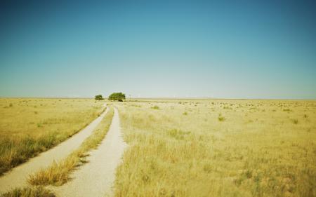 Фото поле, фото, пейзажи, трава