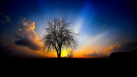 Обои Пейзажи, закат, дерво, черный фон