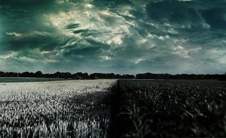 Заставки природа, поле, небо, растения