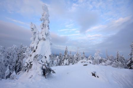 Заставки зима, небо, снег, лес