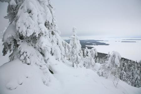 Обои зима, лес, горы
