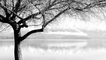 Фото пейзажи, дерево, деревья, ветки
