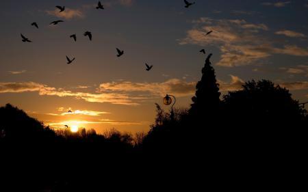 Обои закат, небо, оьлака, птицы