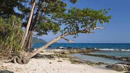 Фото побережье, деревья, песок, океан
