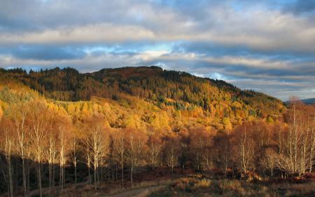 Фото лес, холм, деревья, осень