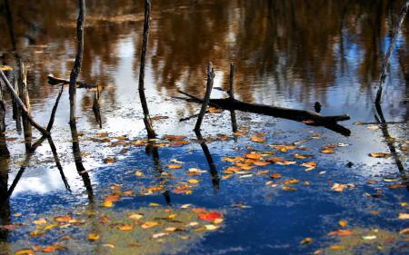 Фото озеро, листья, осень, деревья