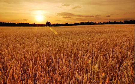 Фотографии поле, деревья, закат