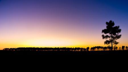 Обои лес, закат, темнота